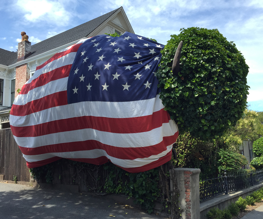 Bison Topiary fit for the 4th of July