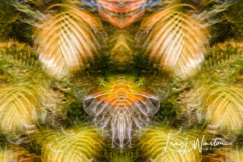05c peles hula web 1