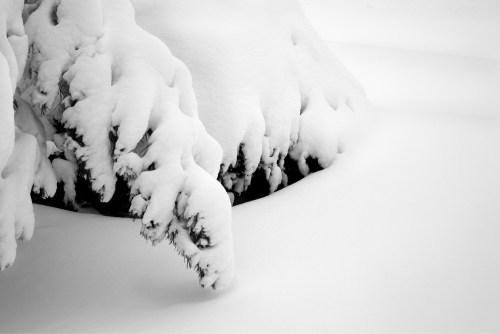 17a Deep Snow